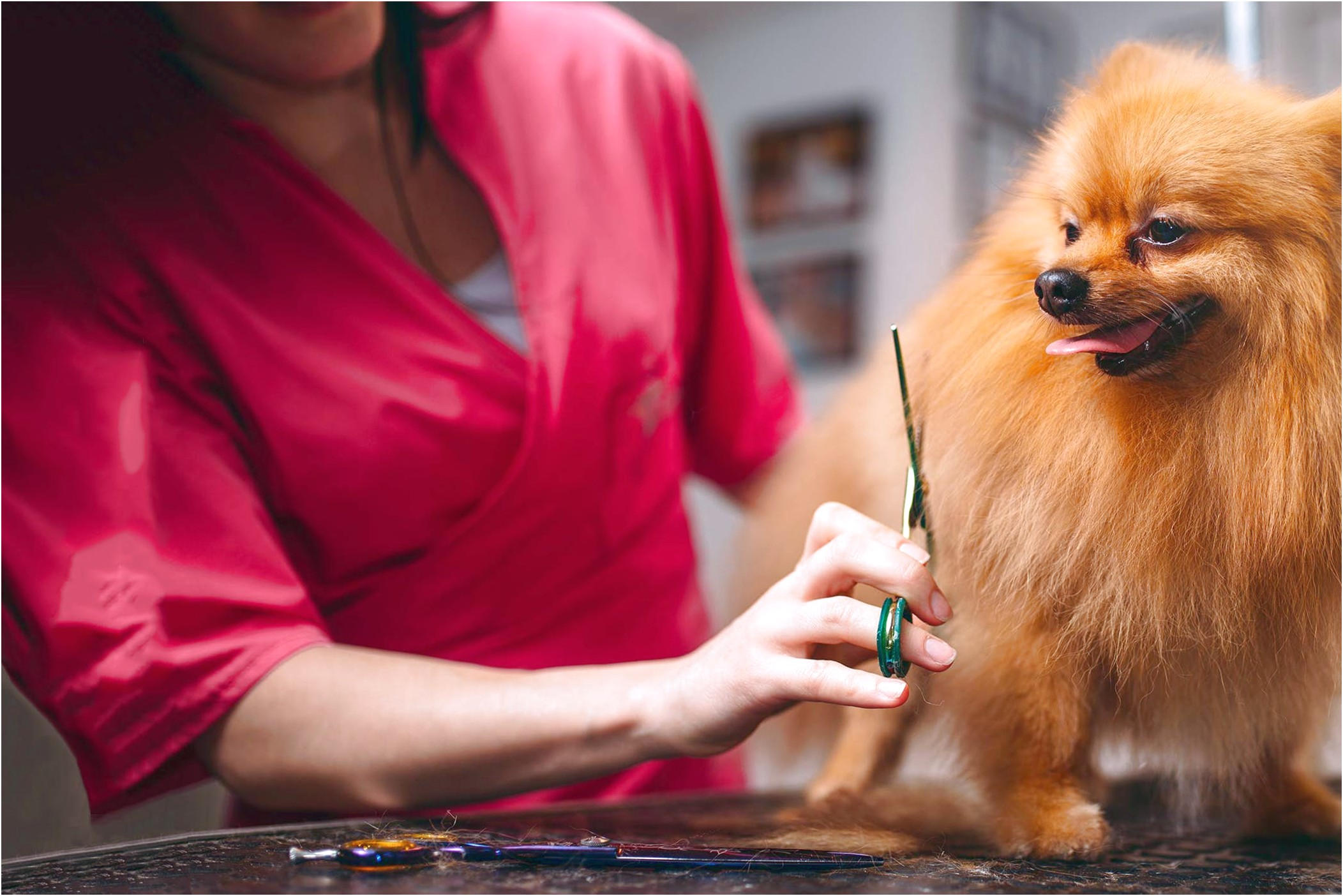 where do you learn to groom dogs