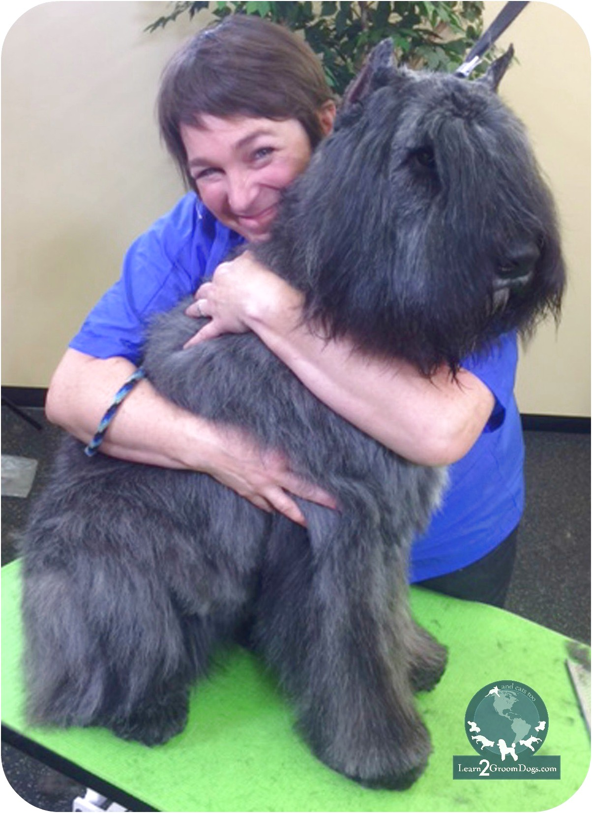 where to learn to groom dogs