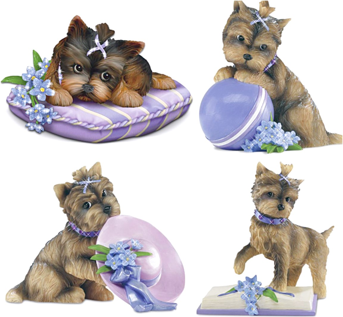 yorkshire terrier for sale bradford