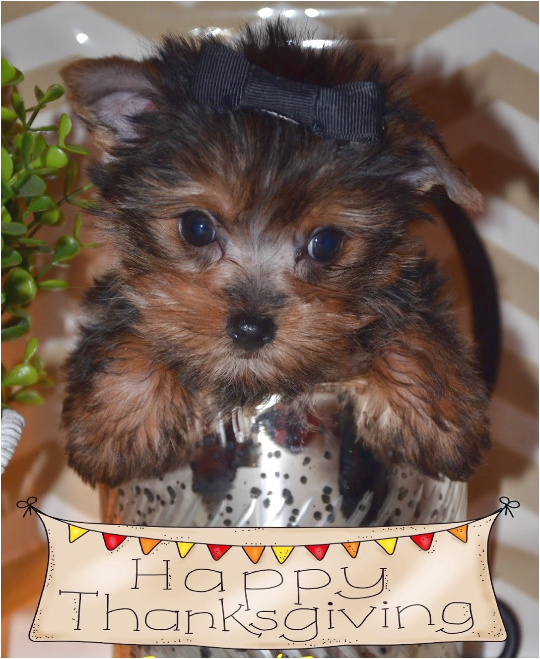 yorkshire terrier puppies alabama