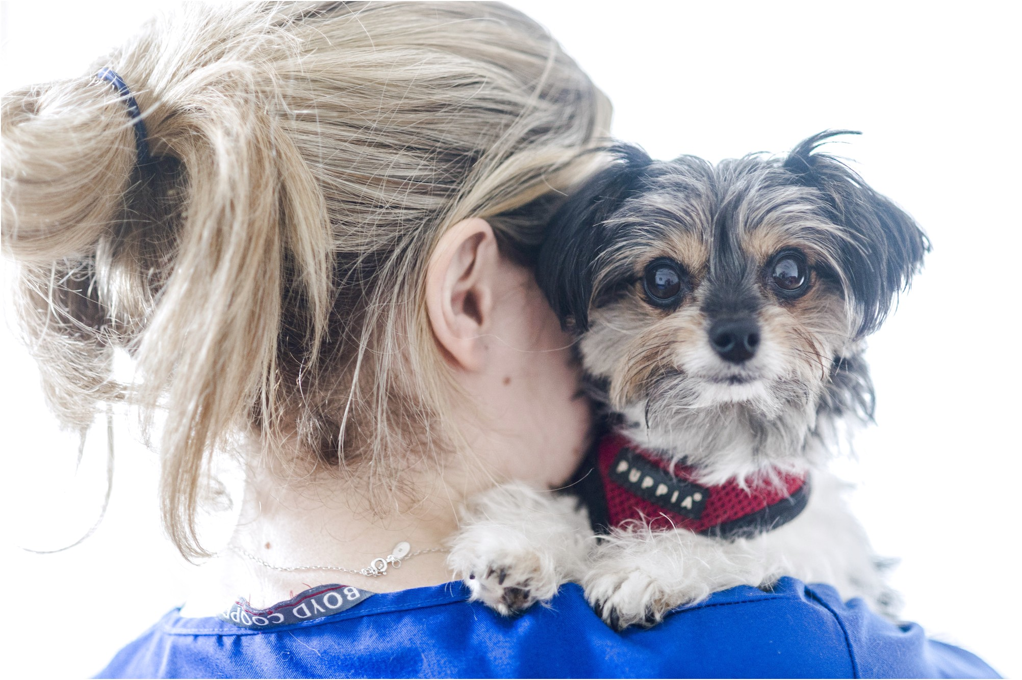 yorkshire terrier puppies for sale redditch