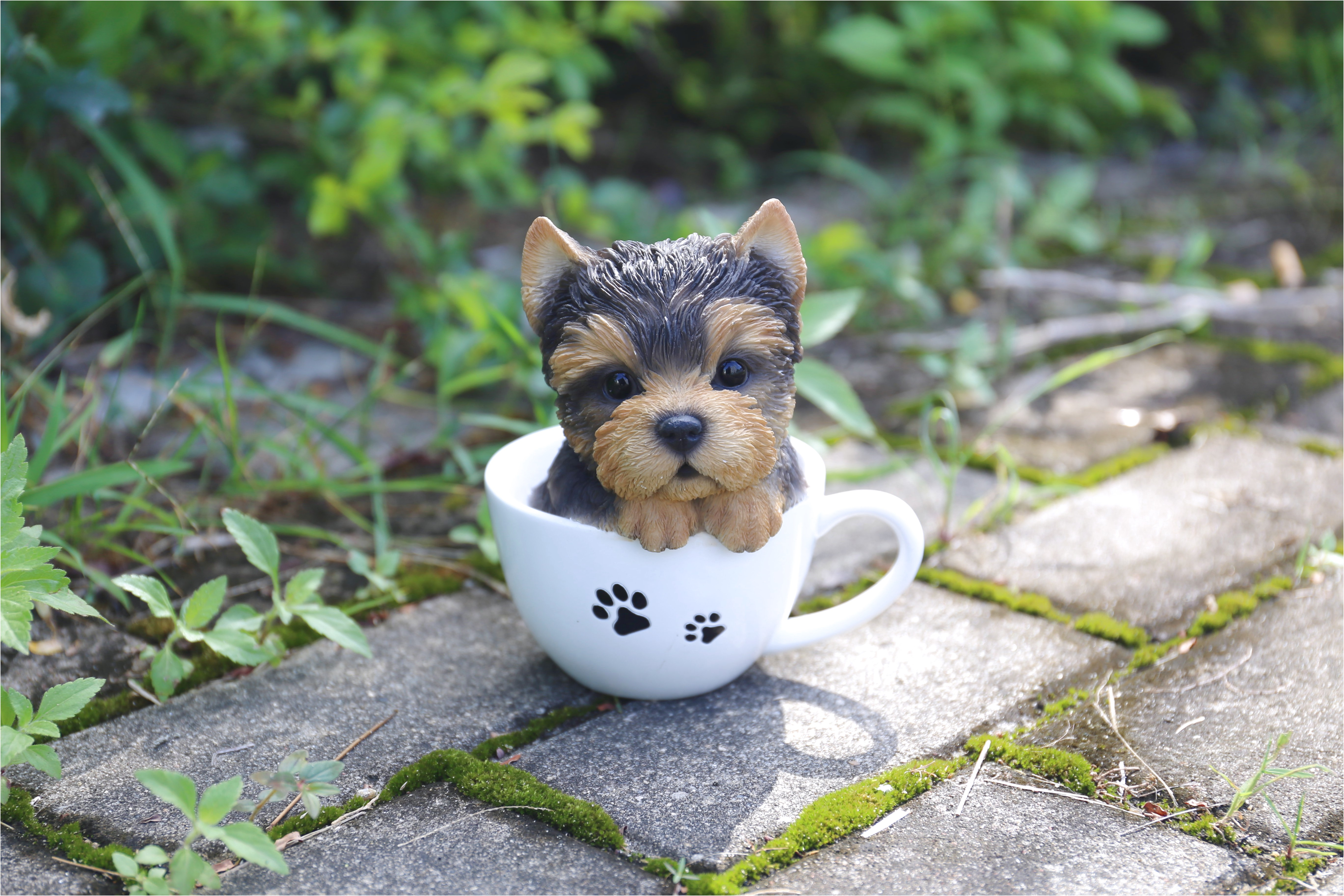 yorkshire terrier puppies ottawa