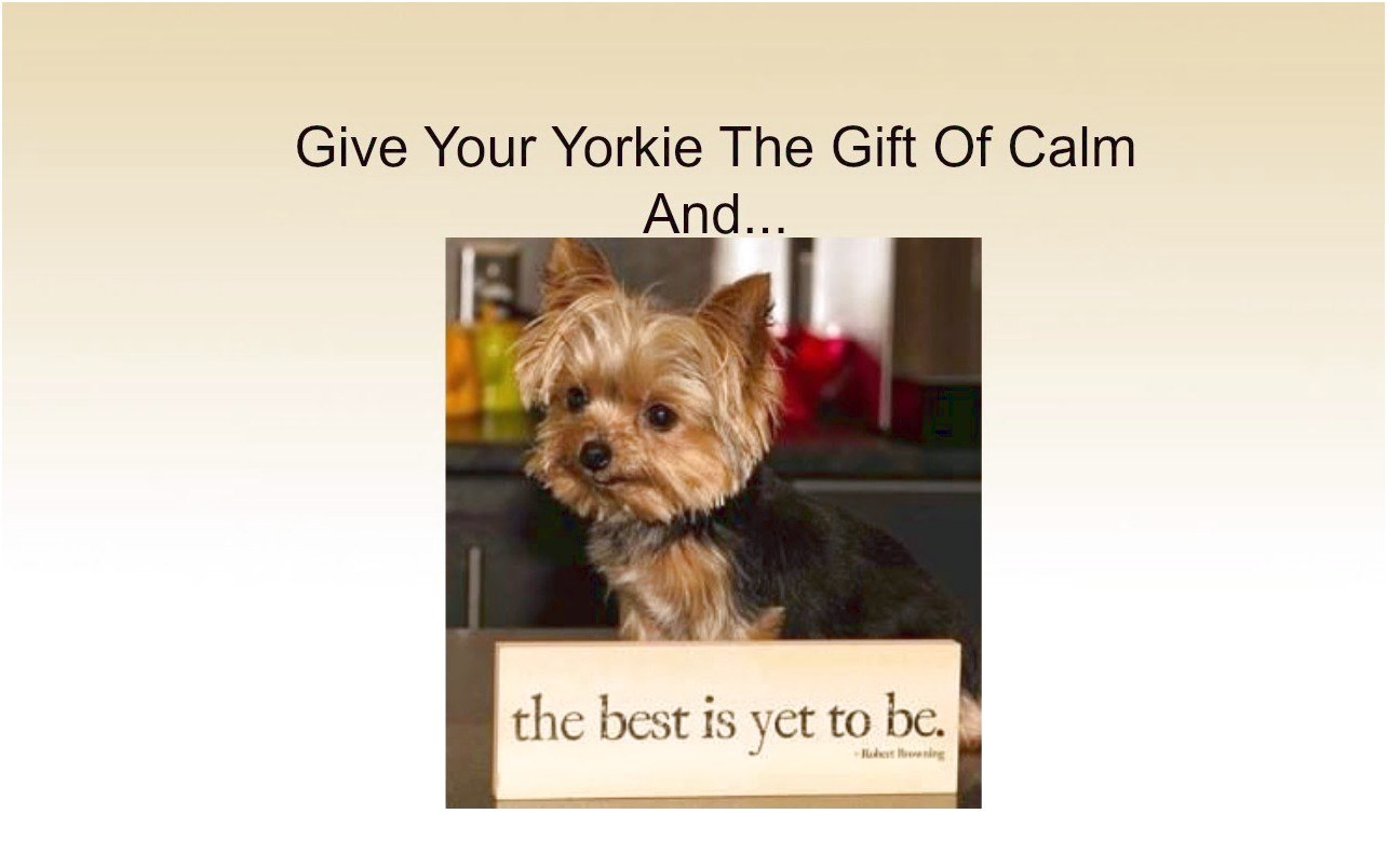 yorkshire terrier puppies you tube