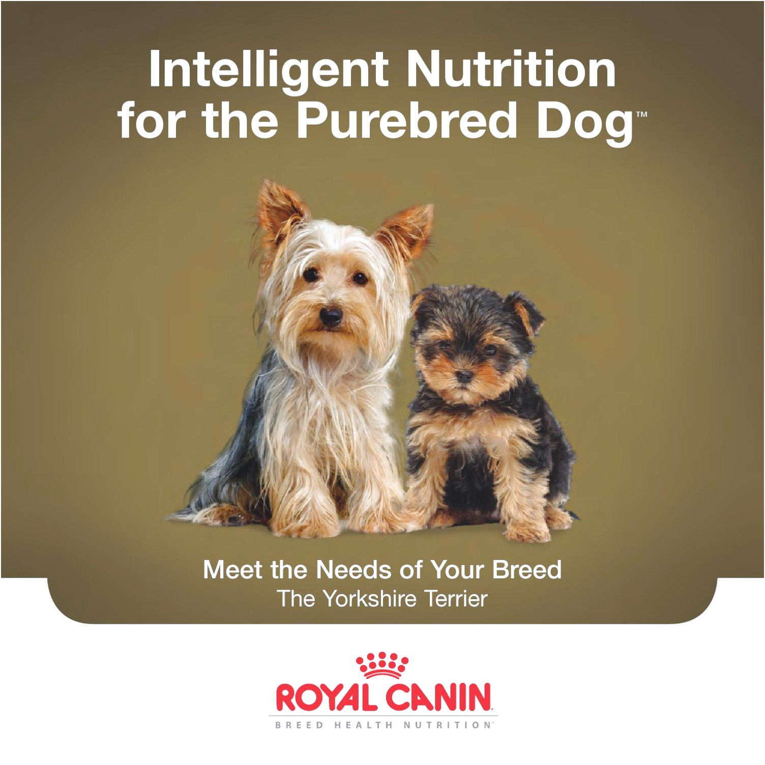 yorkshire terrier puppy 29 royal canin