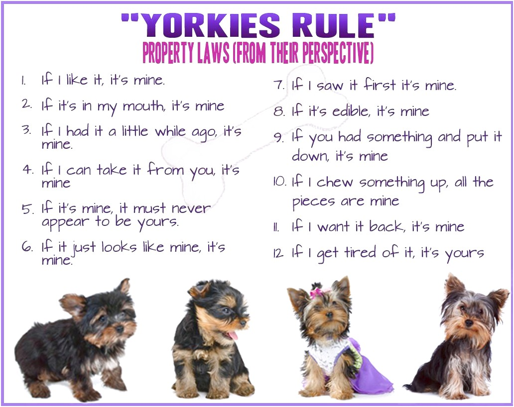 yorkshire terrier puppy facts