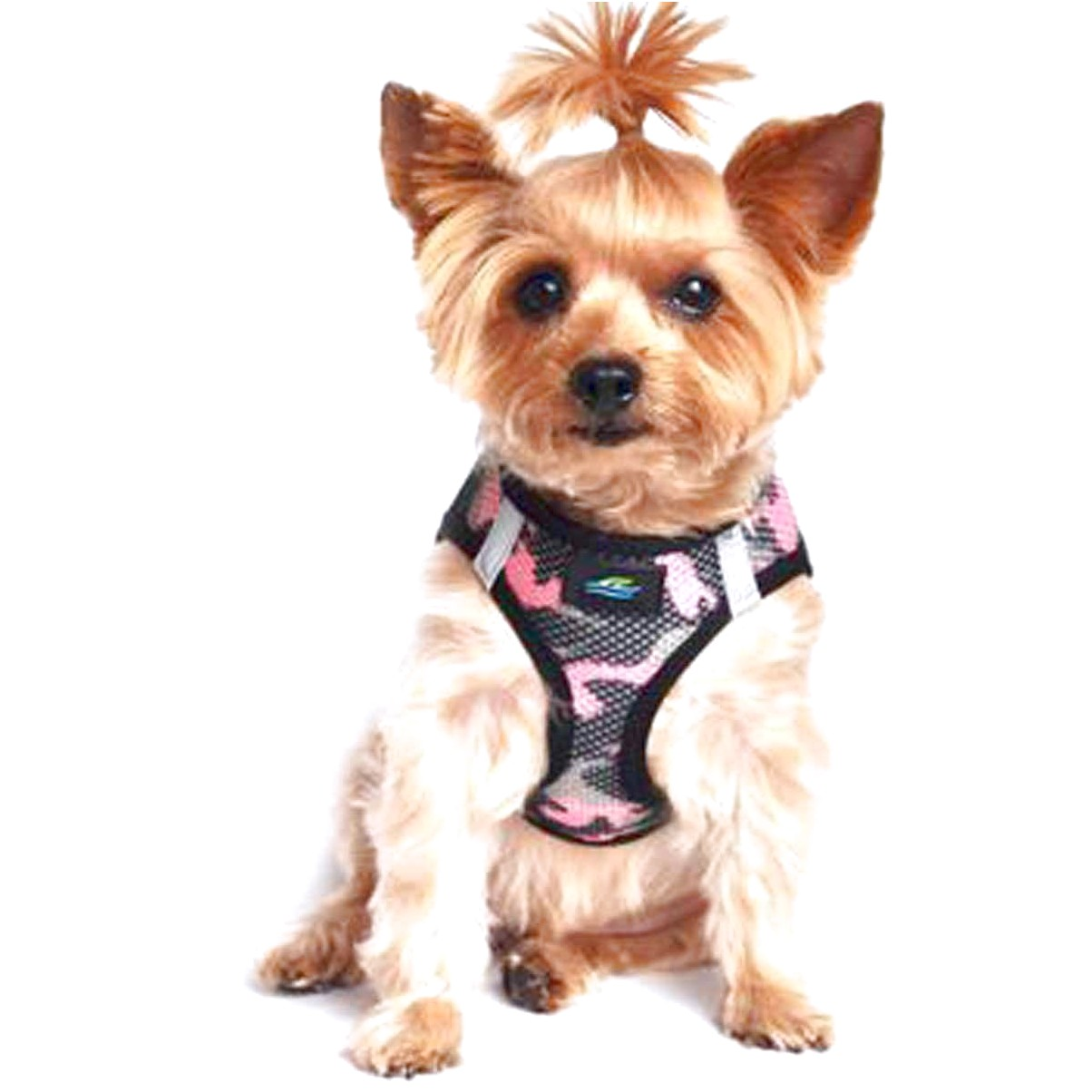 yorkshire terrier puppy harness