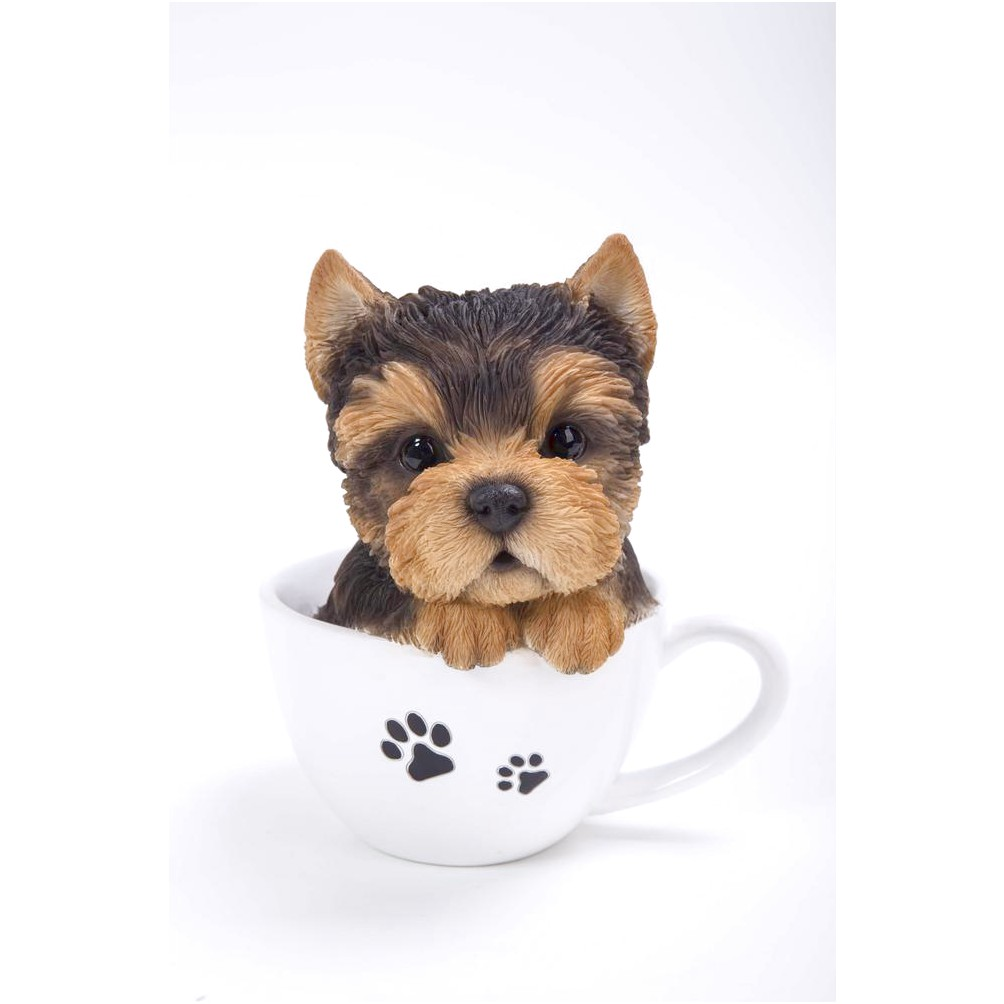 yorkshire terrier puppy teacup