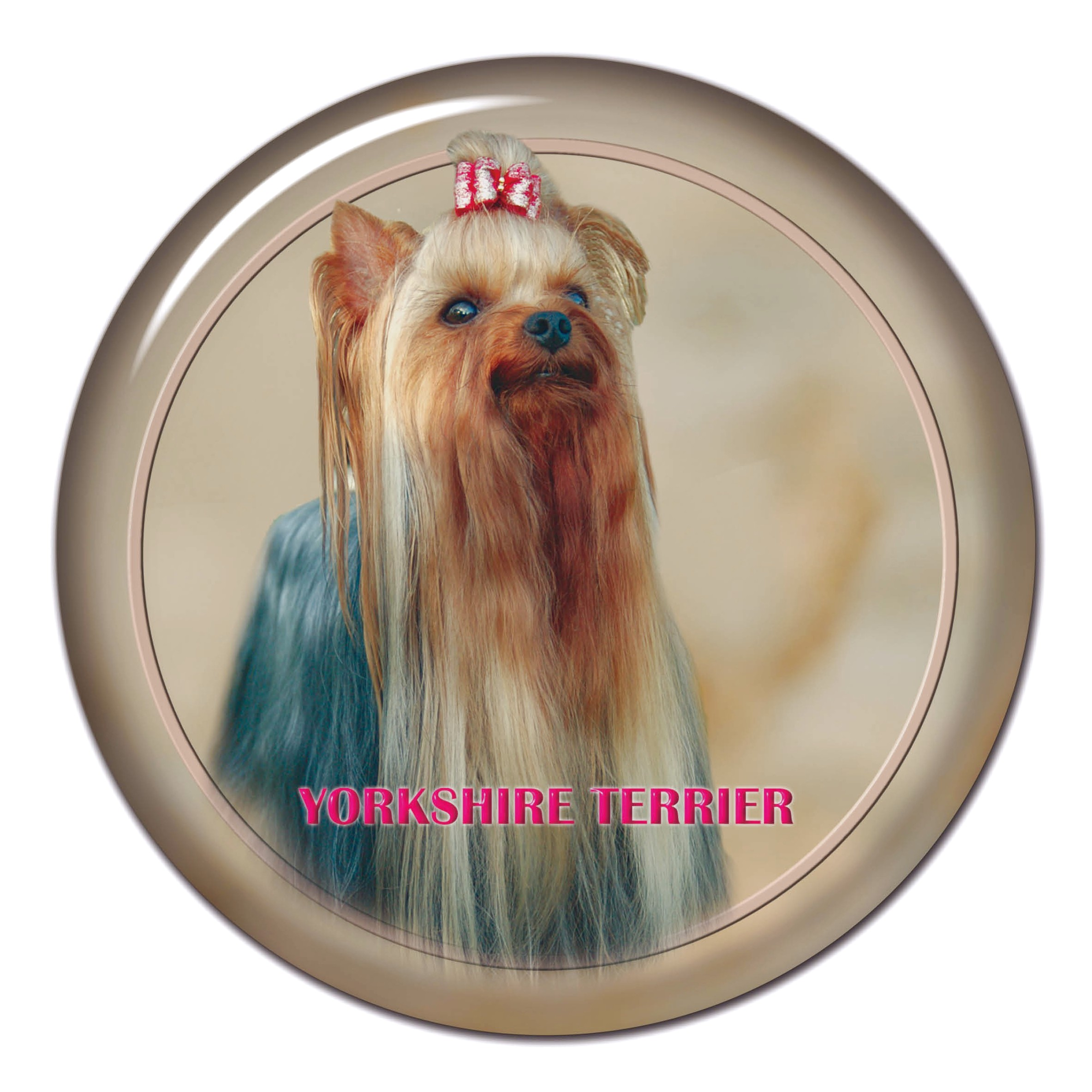 yorkshire terriers 101