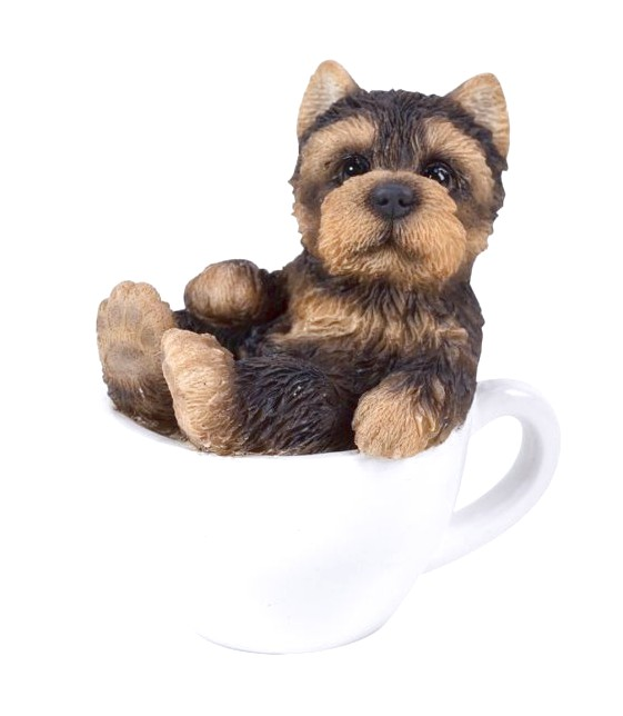yorkshire terriers teacup