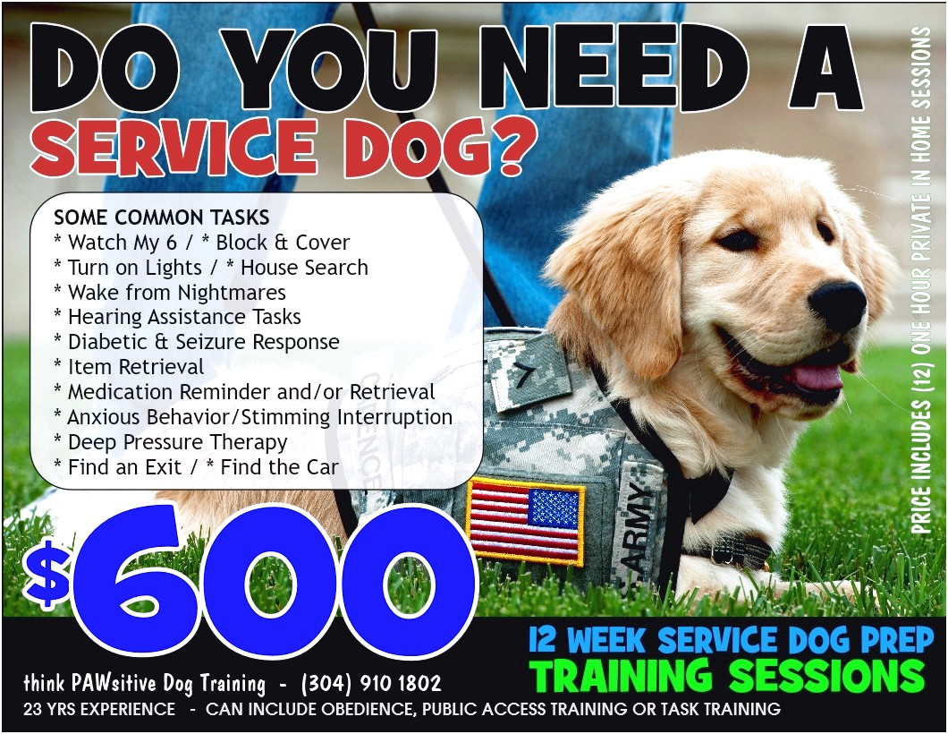 Anxiety Service Dog Training