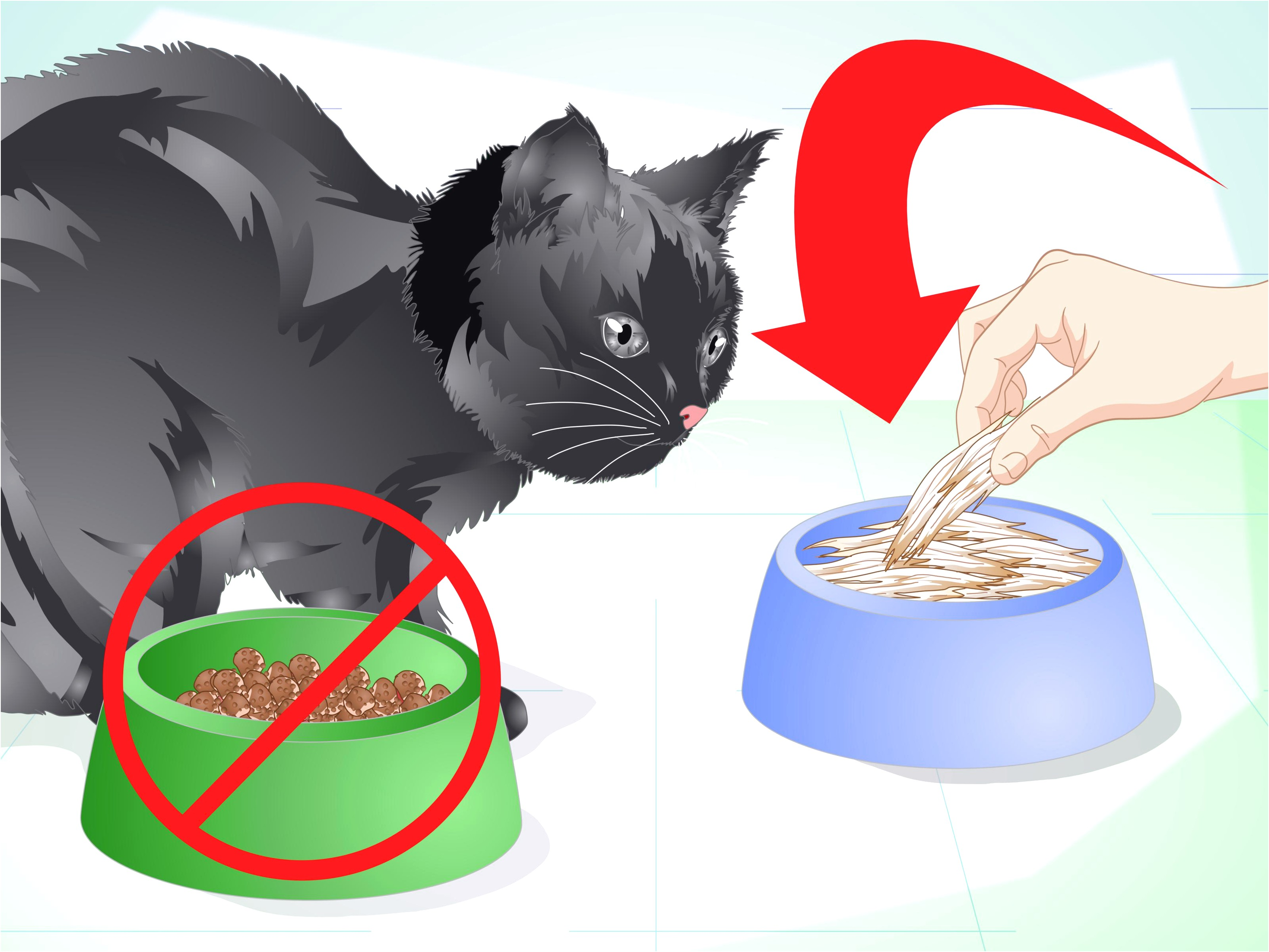 Bad Breath In Cats