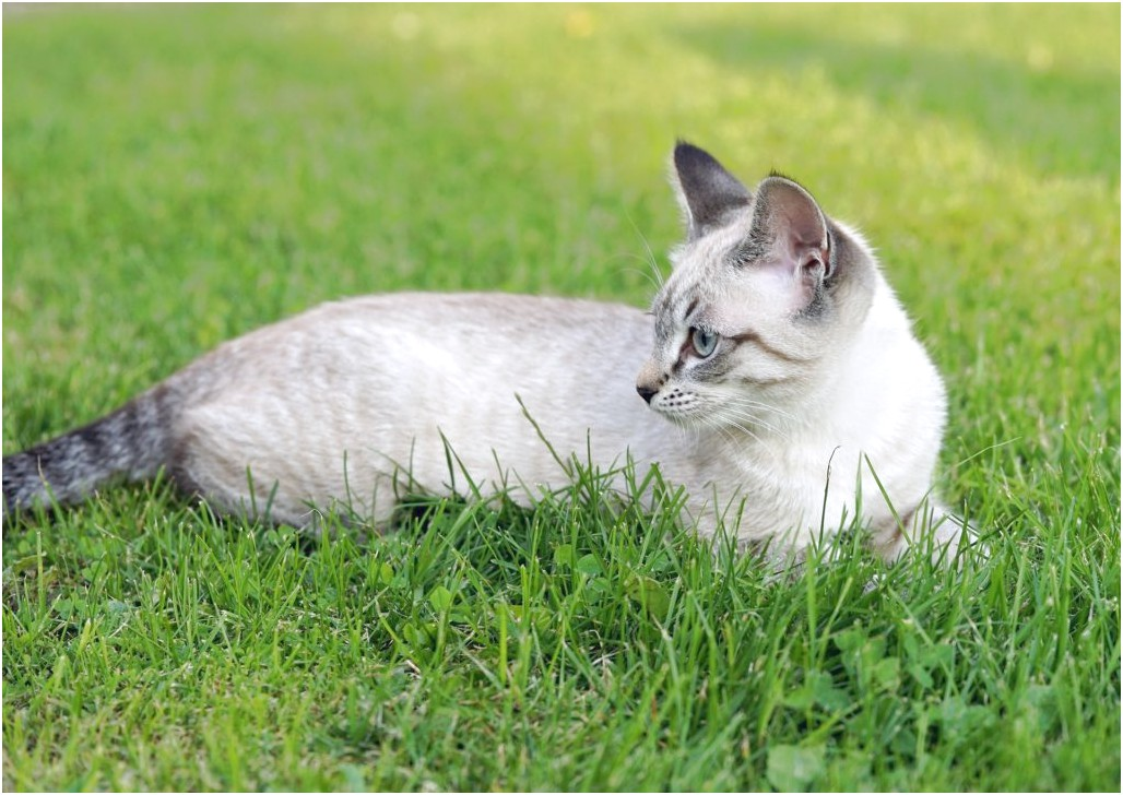 Best Allergy Medicine For Cats