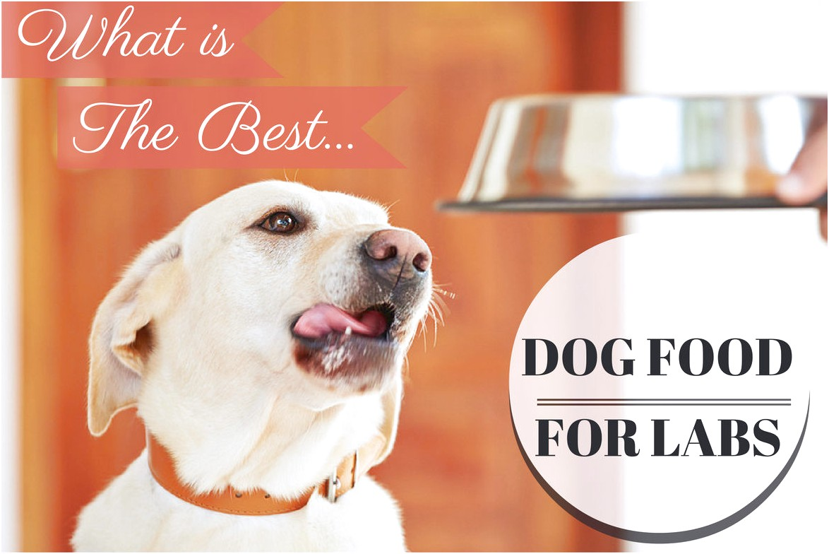 Best Dog Food For Labs