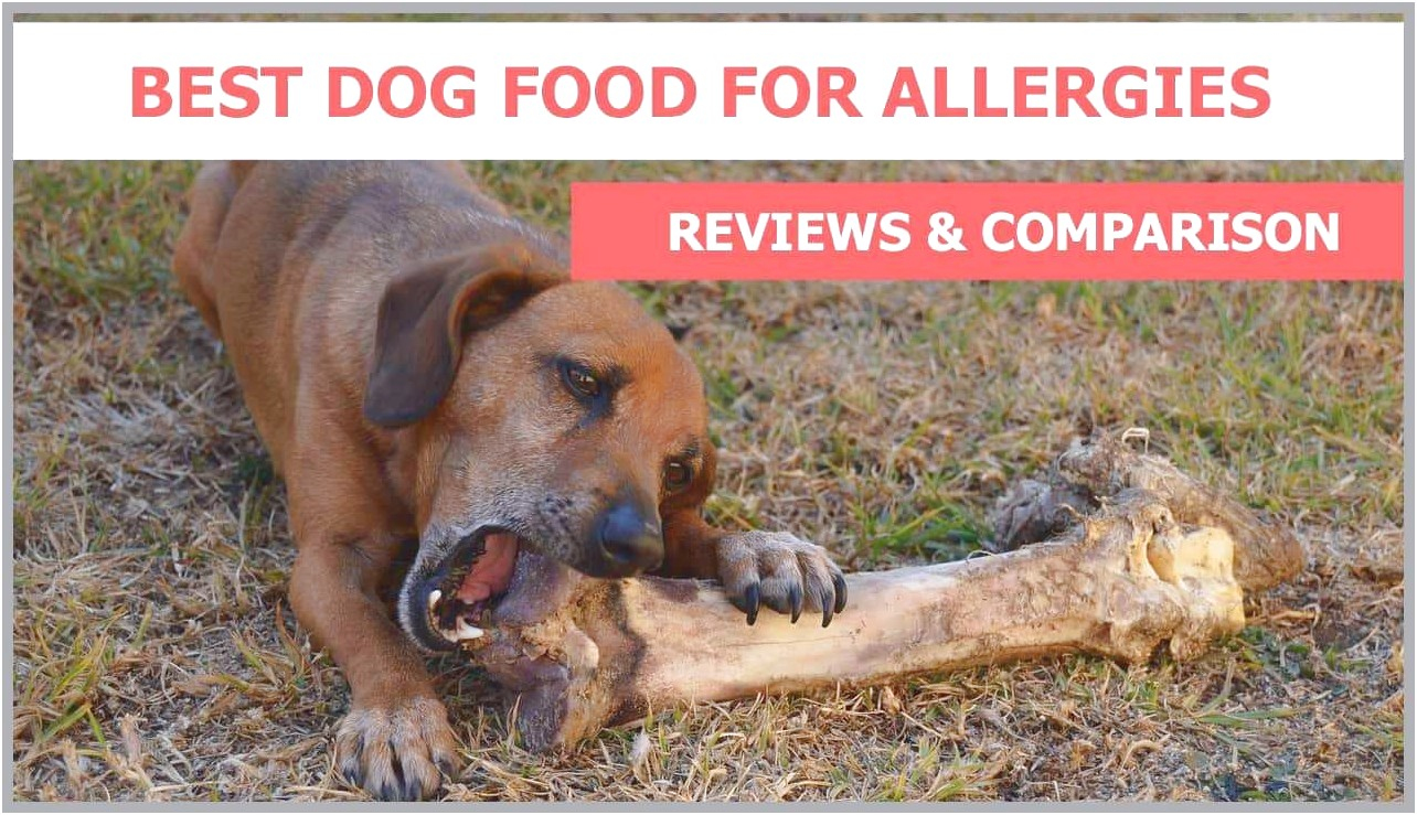 Best Food For Dogs With Skin Allergies