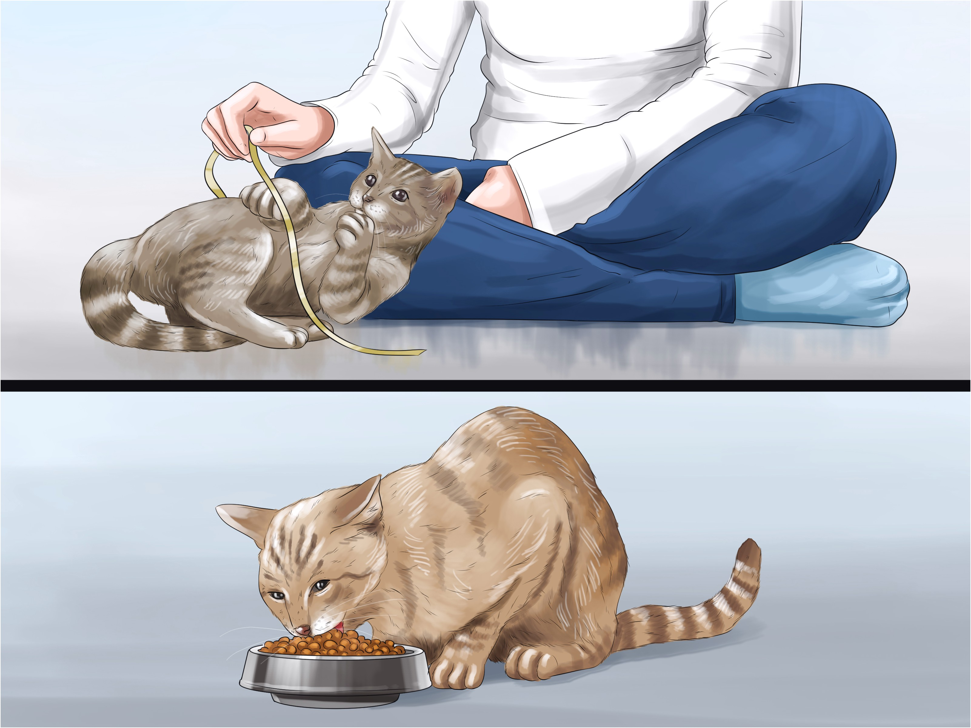 Cat Asthma Treatment