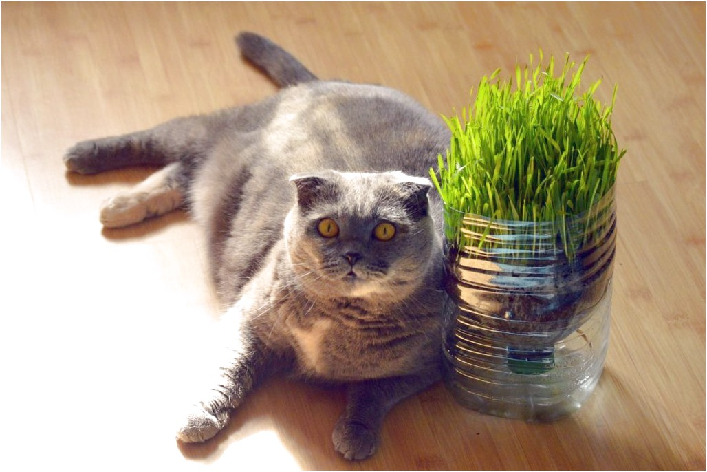 Cat Constipation Home Remedy