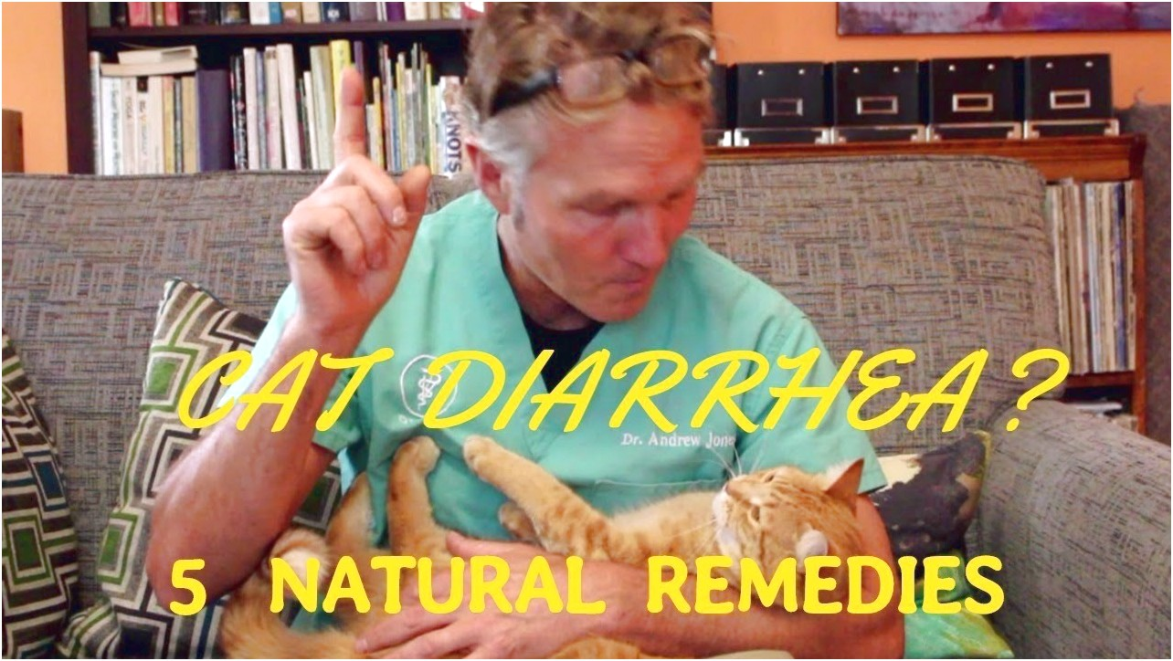 Cat Diarrhea Home Remedy