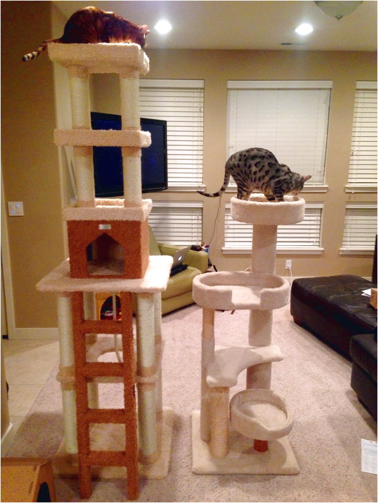 Costco Cat Tree