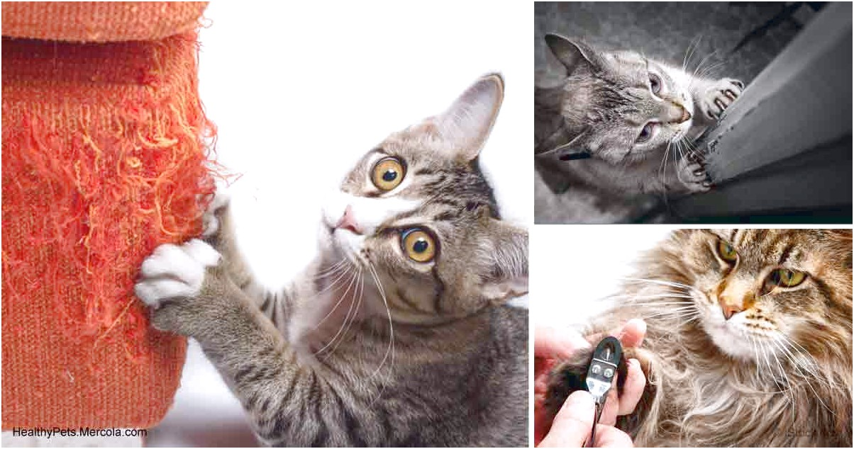 Declawing Cats Alternatives