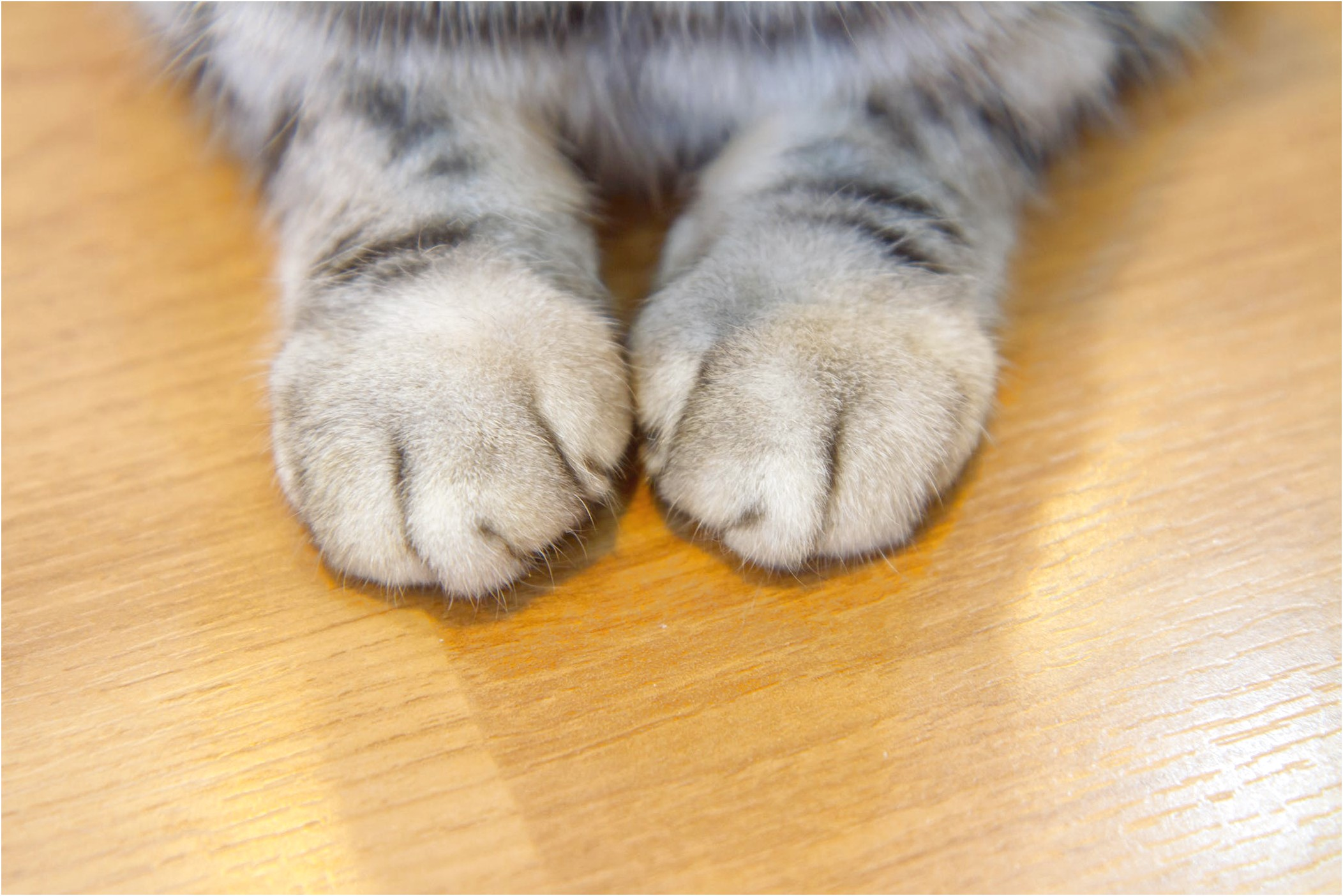 Declawing Cats Price