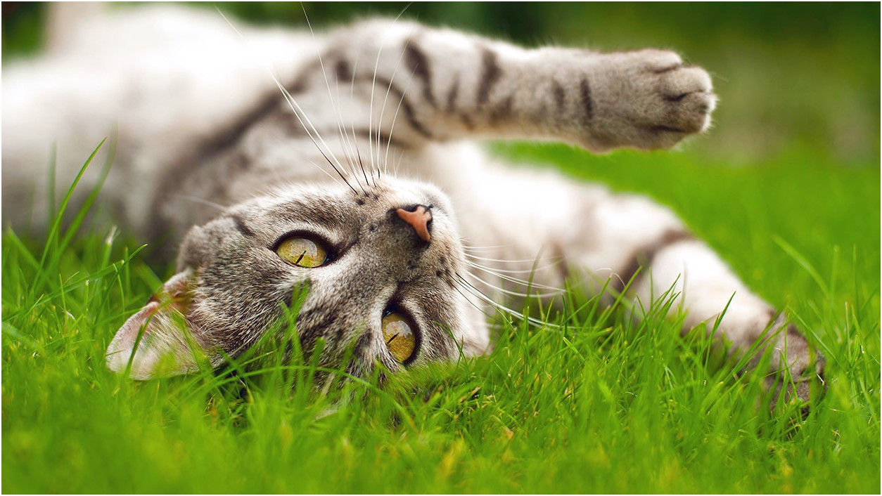 Diatomaceous Earth For Cats