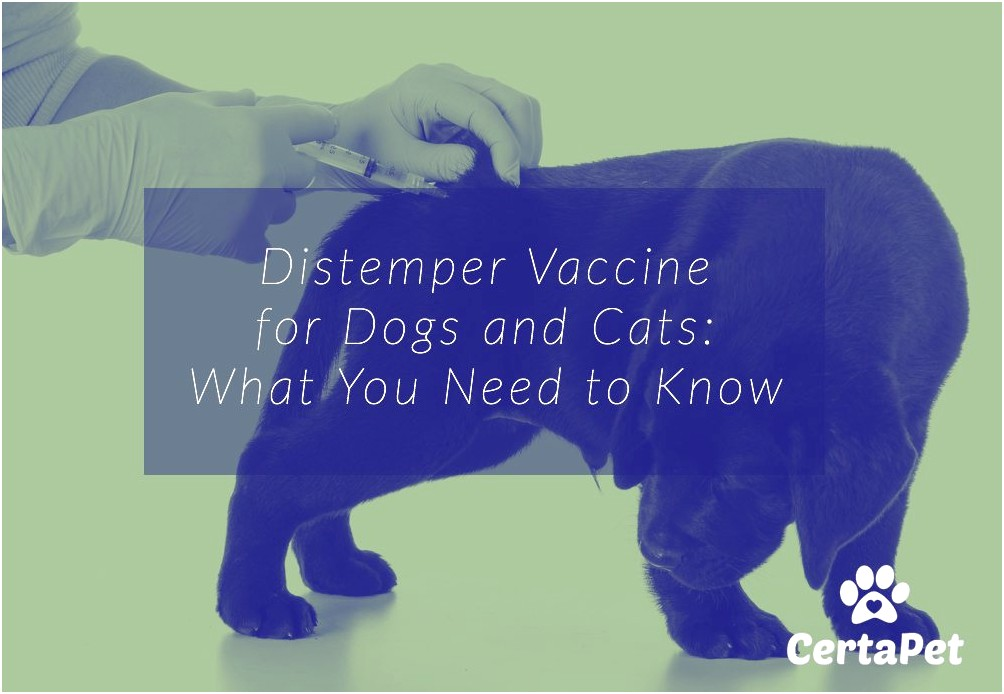 Distemper Vaccine Cats