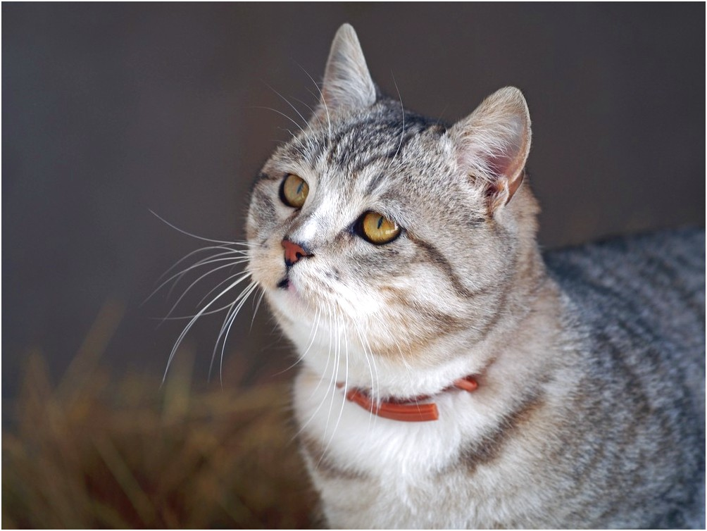 Do Flea Collars Work For Cats