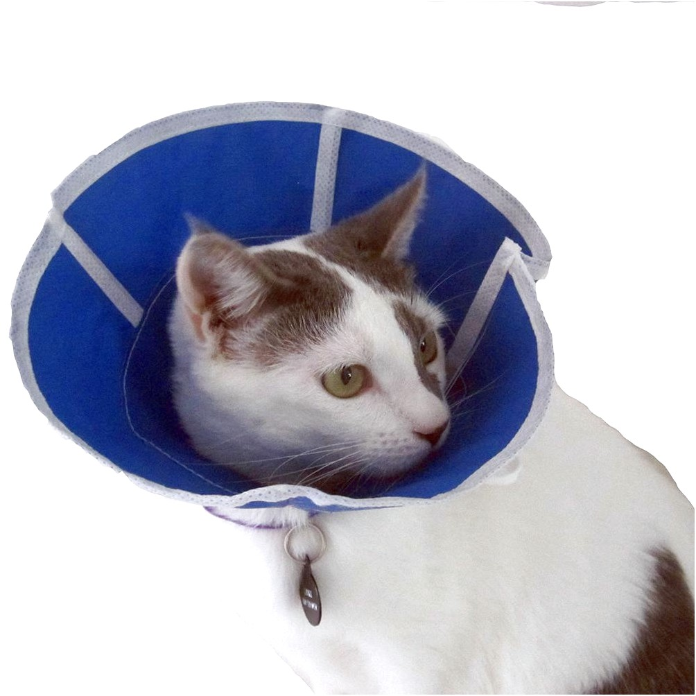 Elizabethan Collar For Cats