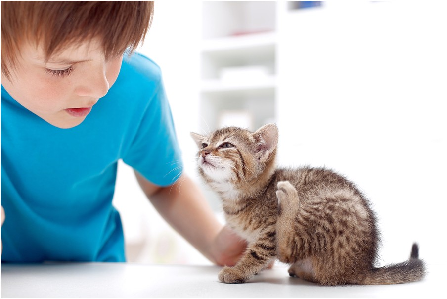 Flea Meds For Cats