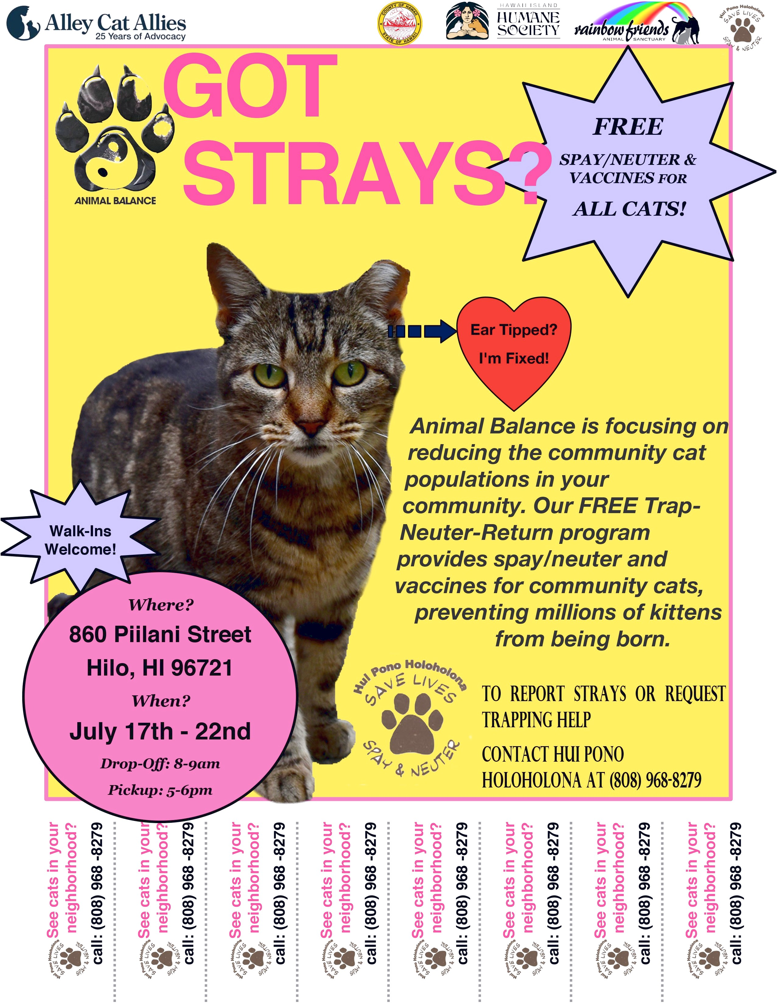 Free Spay And Neuter For Cats