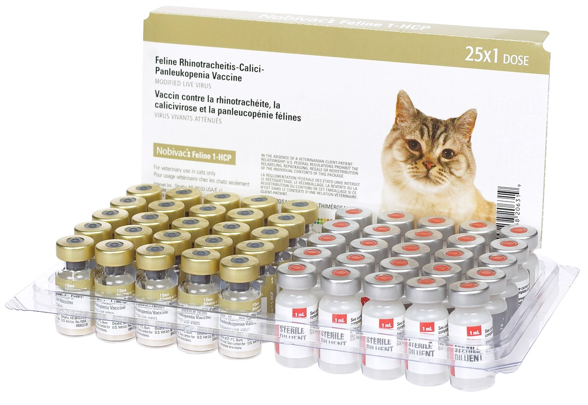 Fvrcp Vaccine For Cats
