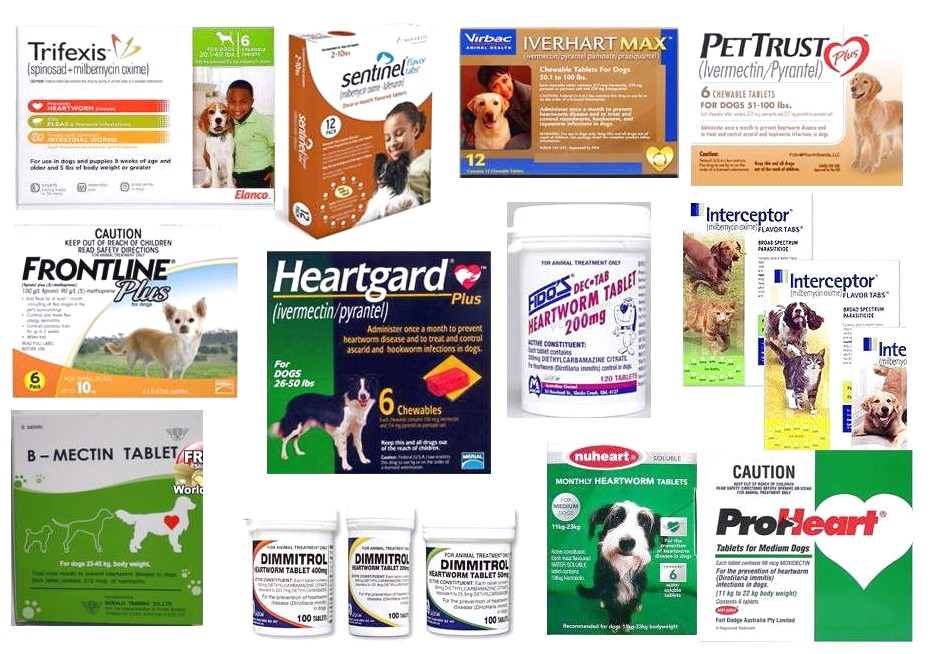 Heartworm Prevention For Cats