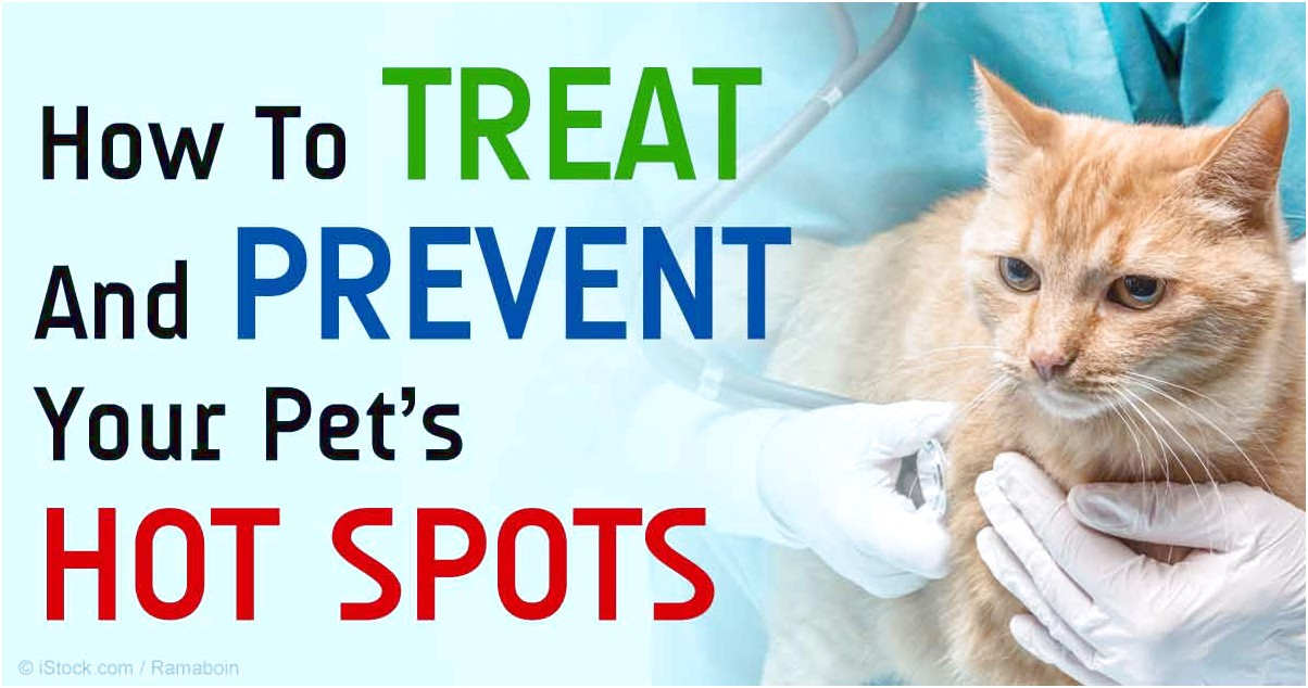 Hot Spots On Cats