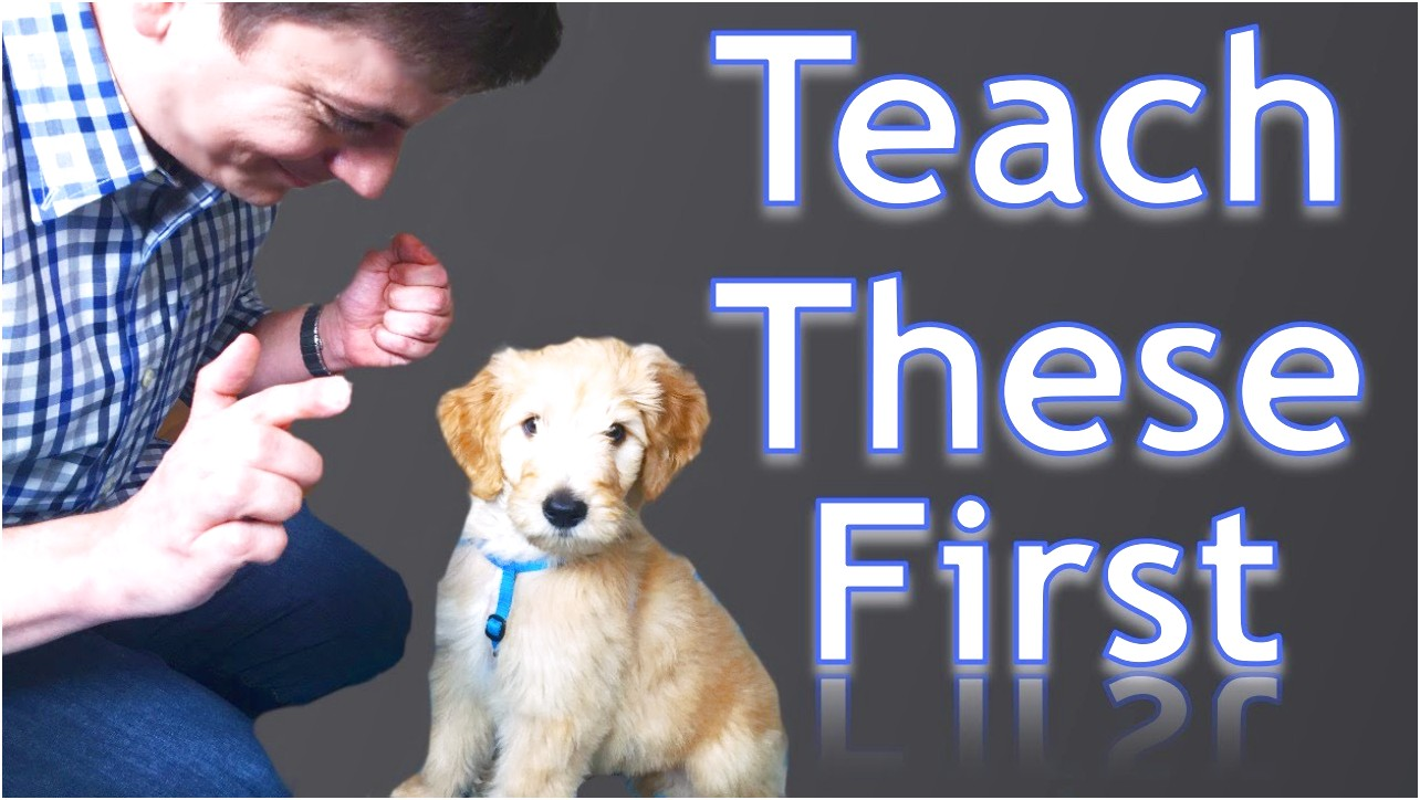How Much Is Dog Training