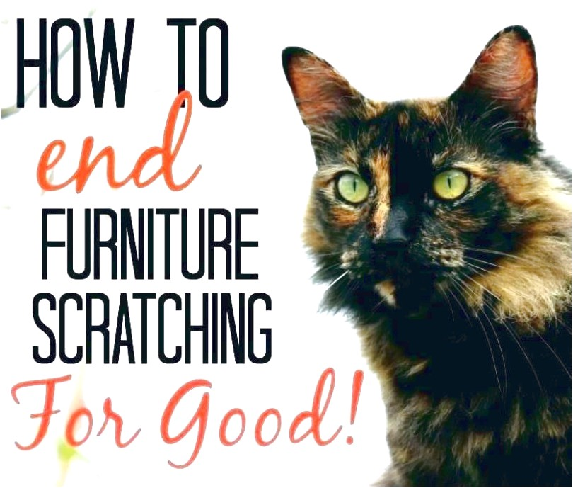 How To Keep A Cat From Scratching