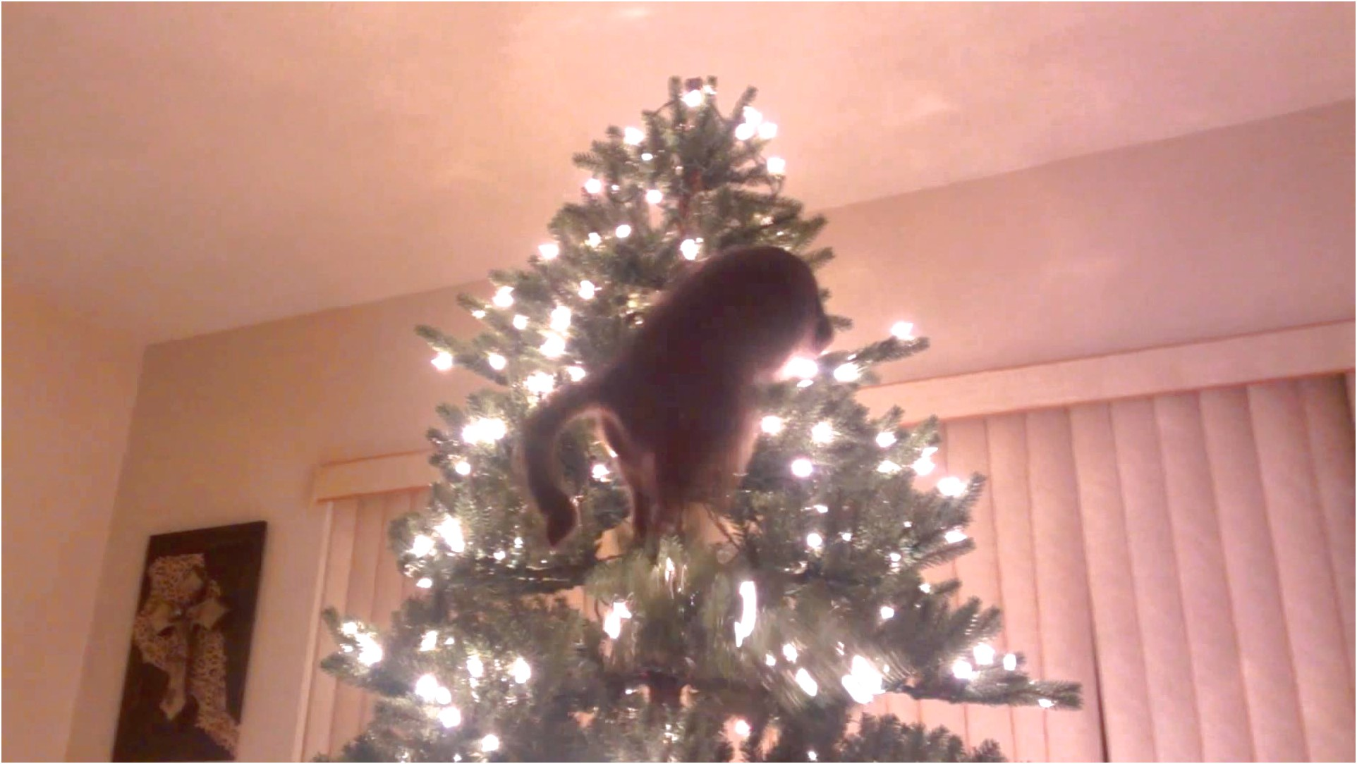 How To Keep Cats Away From Christmas Trees