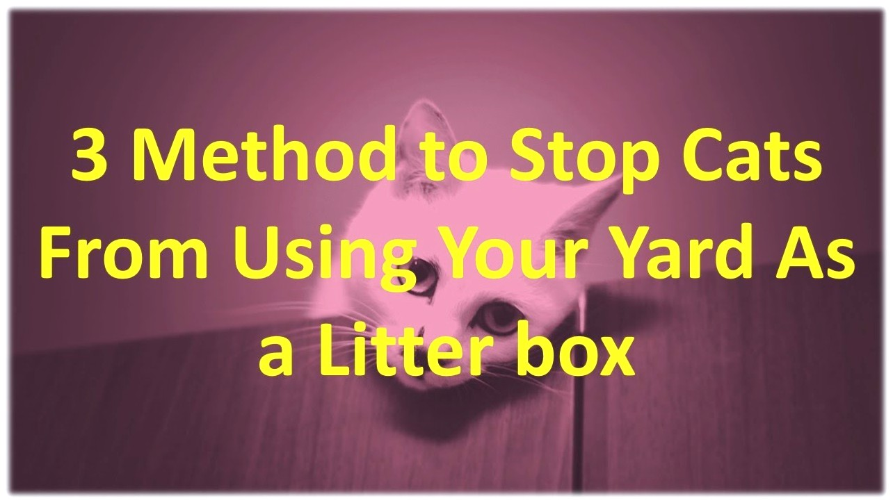 How To Keep Cats From Pooping In My Yard