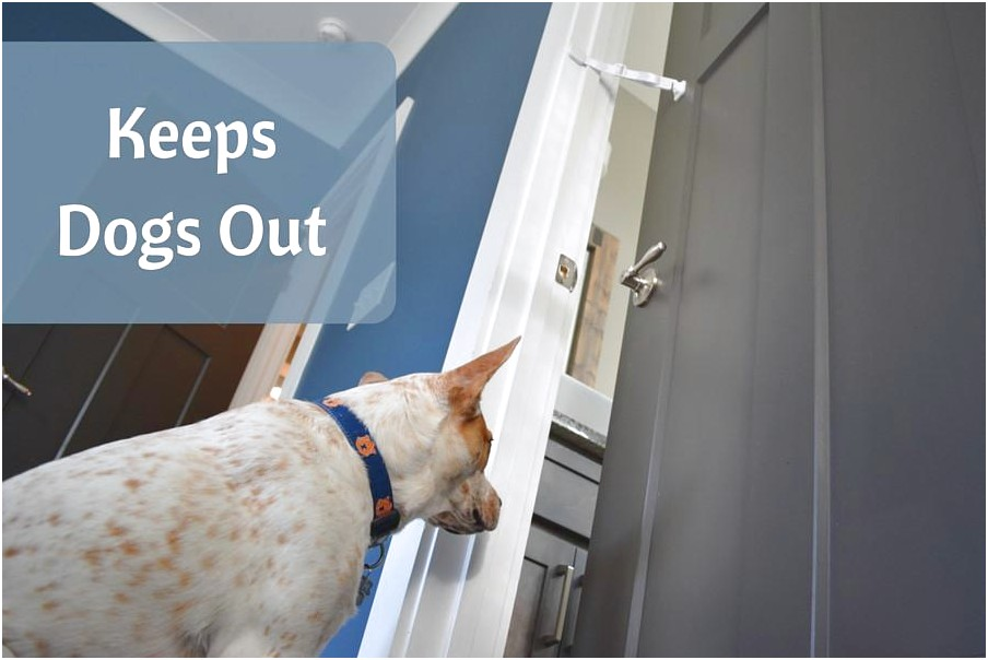 How To Keep Dog Out Of Cat Litter