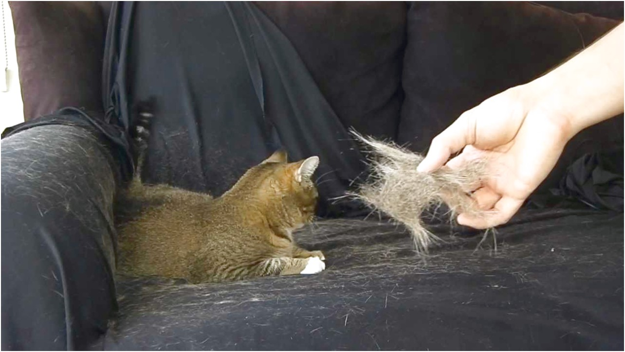 How To Stop A Cat From Shedding