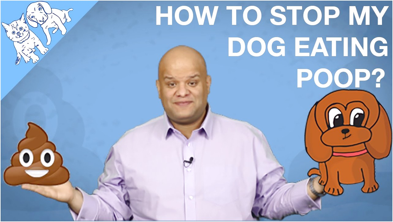 How To Stop Dog From Eating Cat Poop