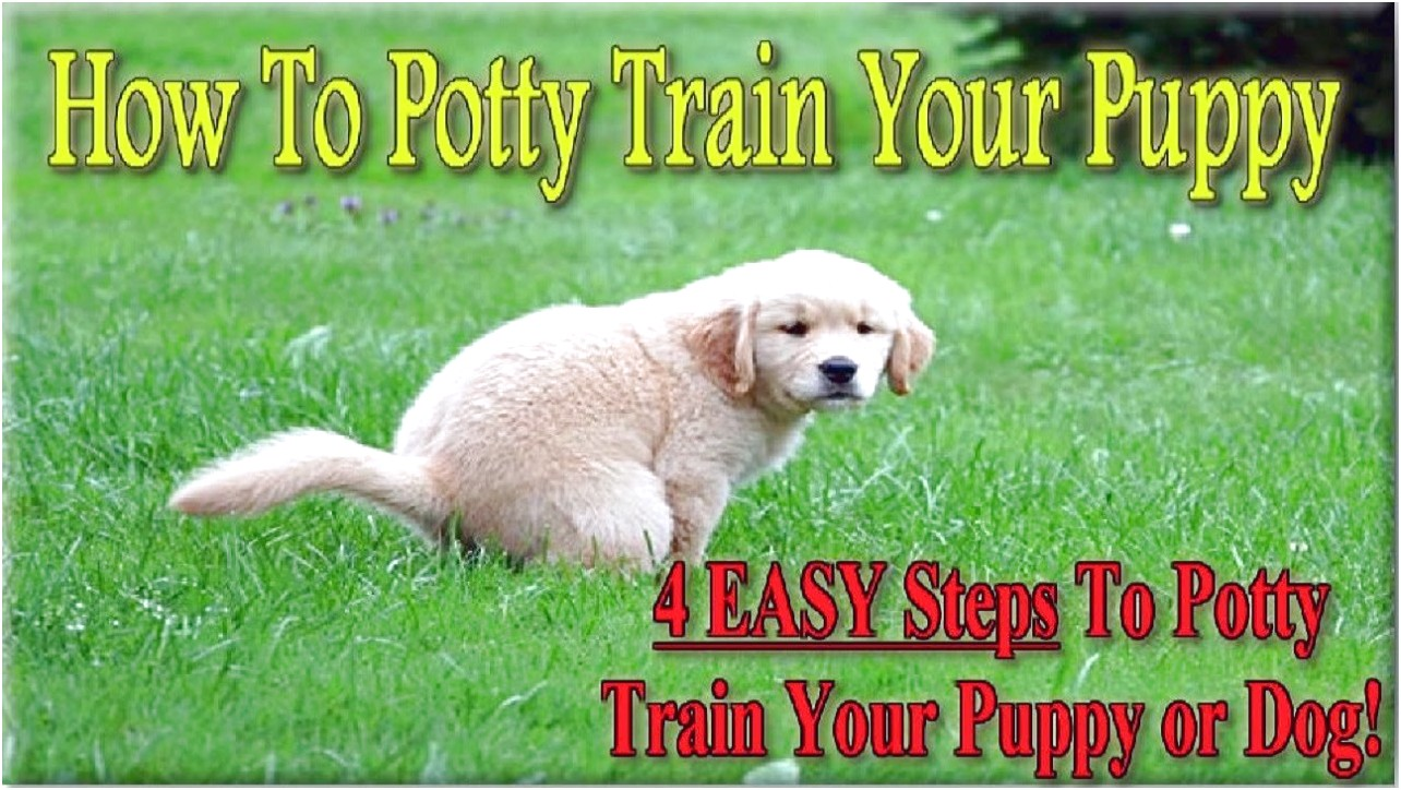 How To Train A Dog To Pee Outside