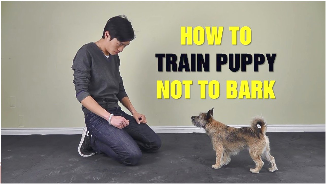 How To Train A Dog To Stop Barking