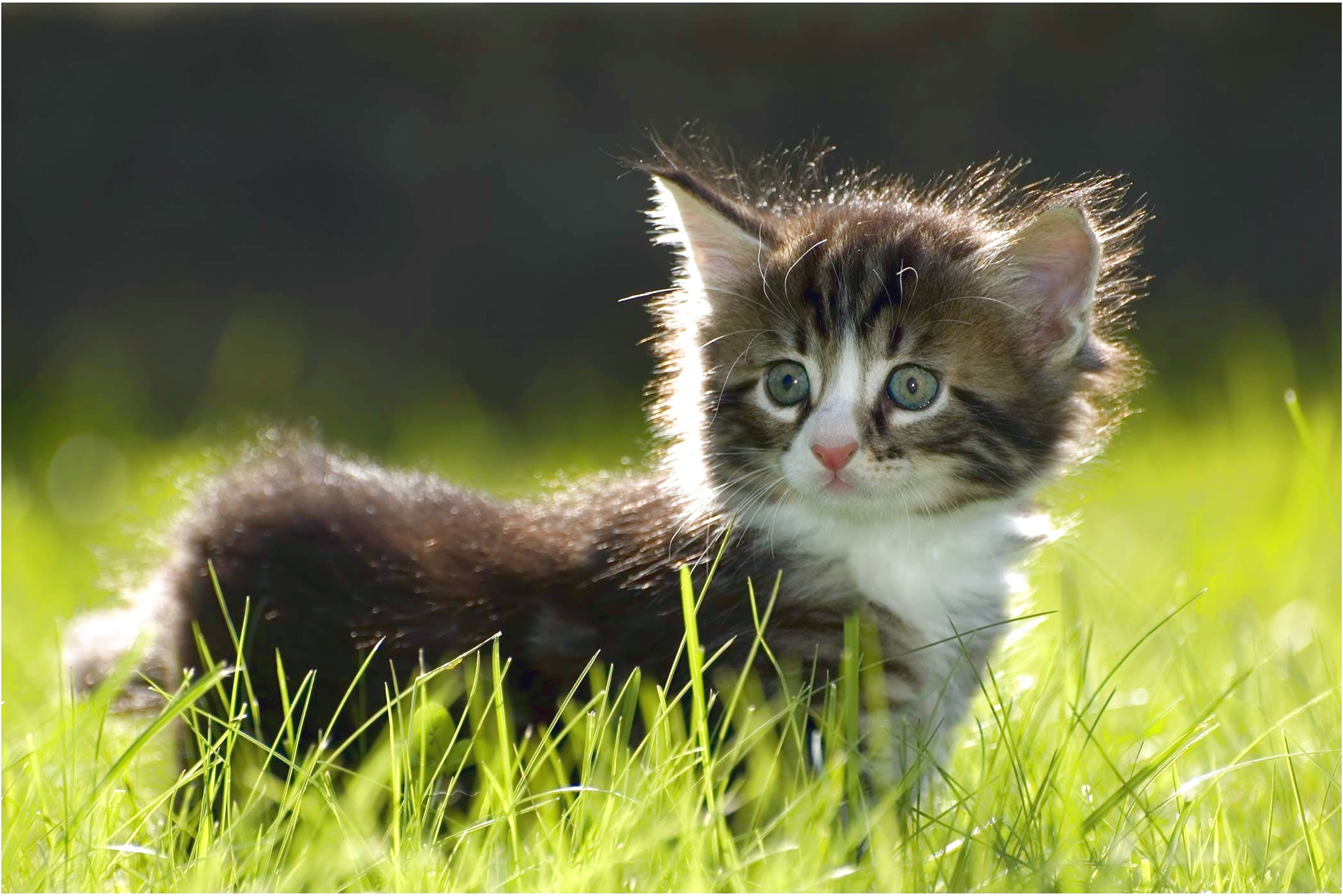 Kidney Infection In Cats