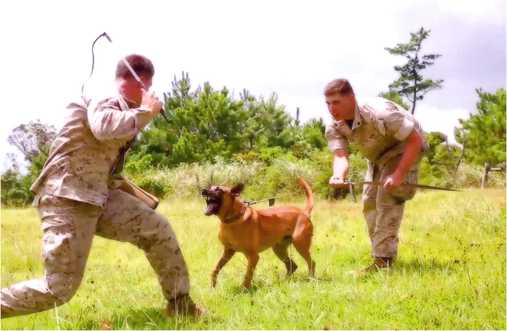 Military Trained Dogs