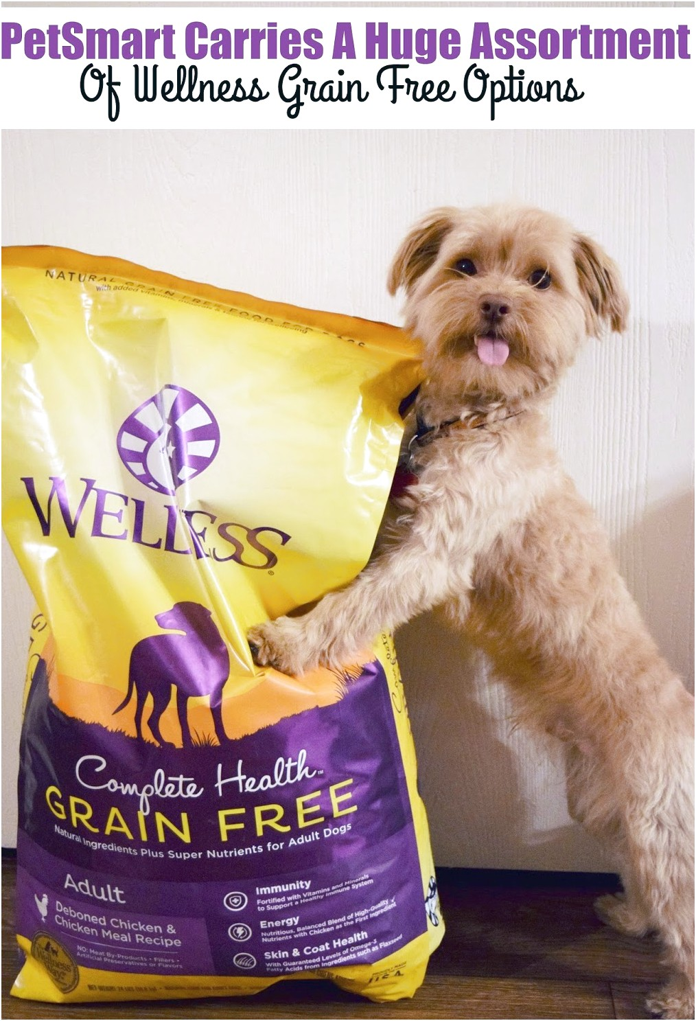 Petsmart Grain Free Dog Food