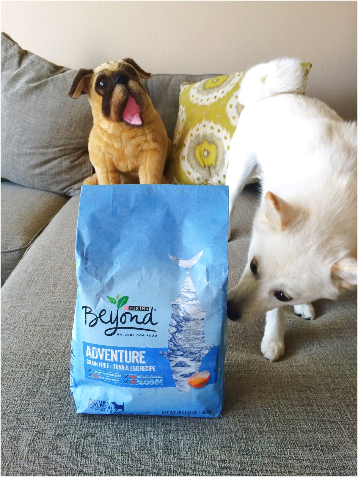 Purina Beyond Dog Food Review