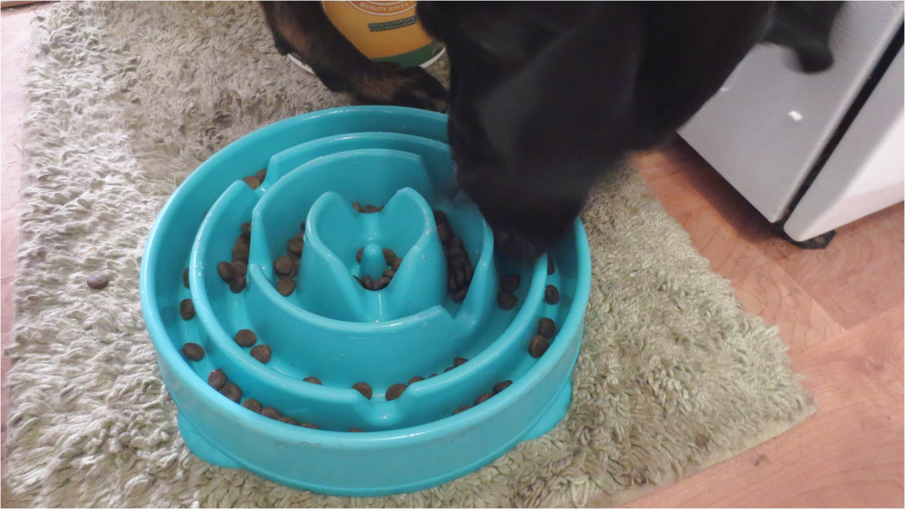 Puzzle Food Bowl For Dogs
