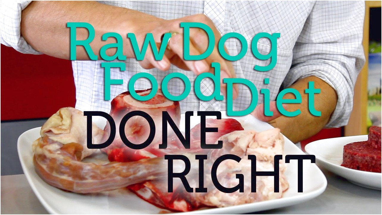 Raw Dog Food Diet Recipes