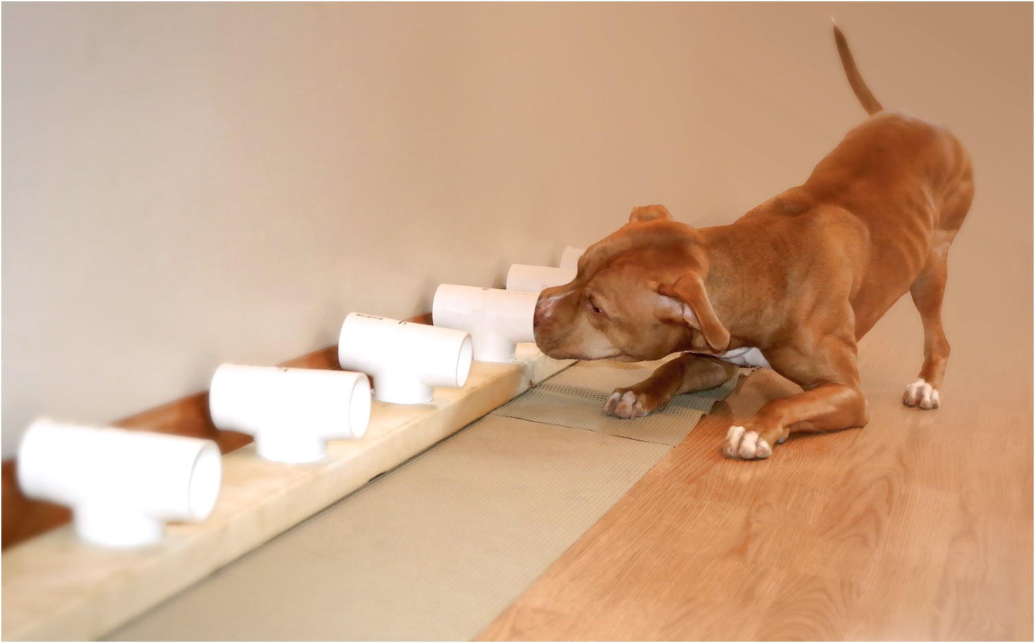Scent Training For Dogs