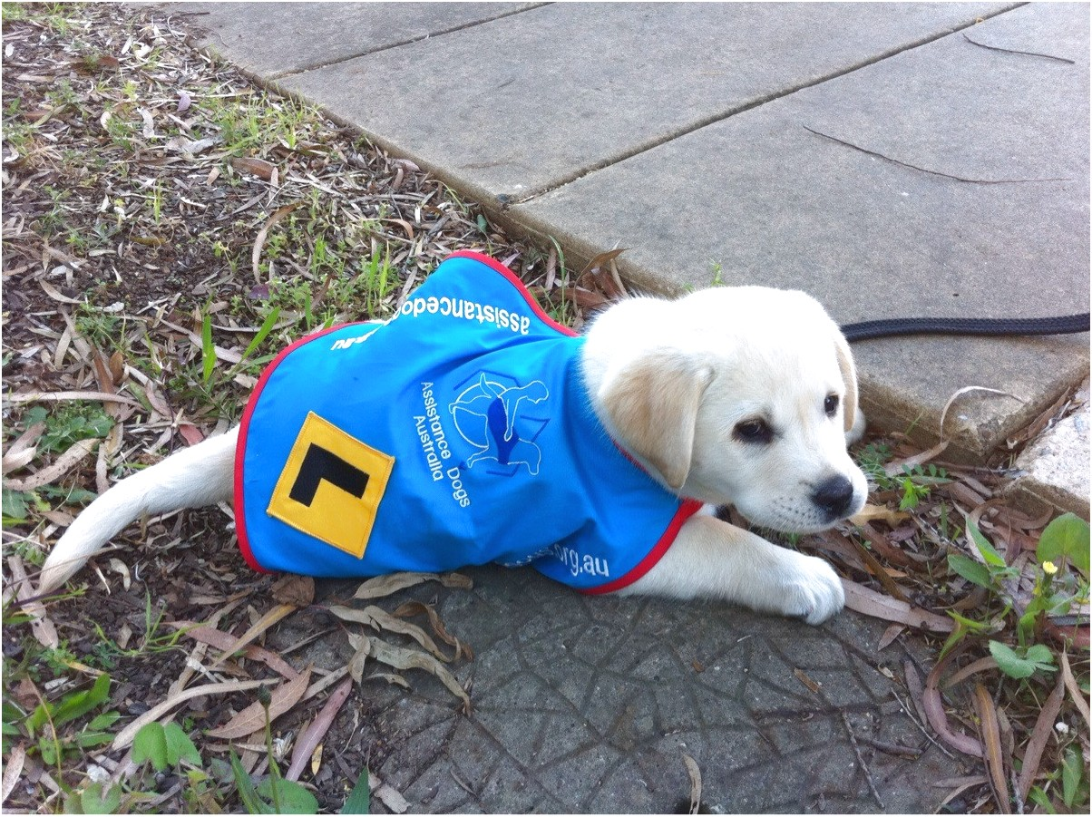 Seeing Eye Dog Training